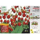 Wilde Aardbeienplant  - Orto MIo