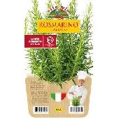ROSEMARY -  Pot plant 14 cm - Orto mio